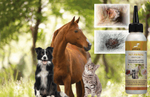 Wound care for animals