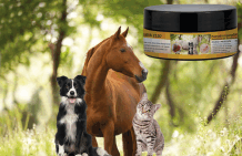 Skin ointment for dogs, horses and cats