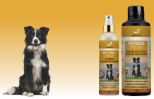 Shampoo and grooming for the dog